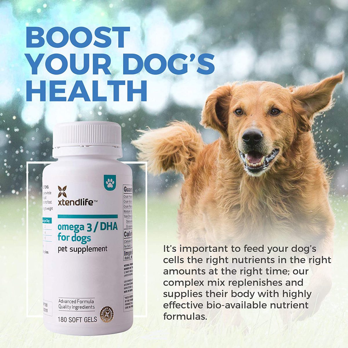 best fish oil for dogs